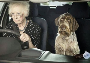 funny dog old lady driving